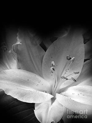 Lily Flower Black And White Poster by Lutz Baar