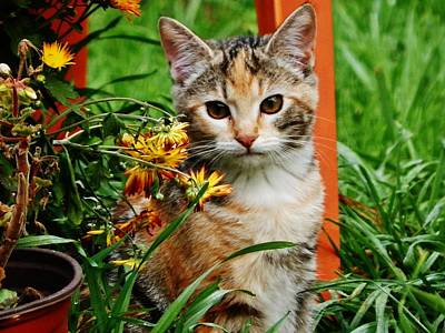 Poster featuring the photograph Lily Garden Cat by VLee Watson