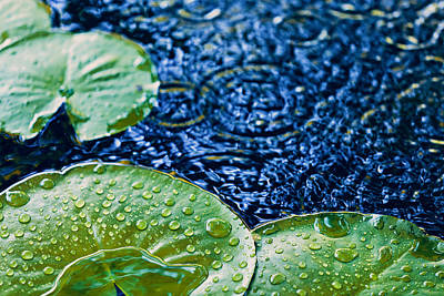 Lily Pads Poster by Debi Bishop
