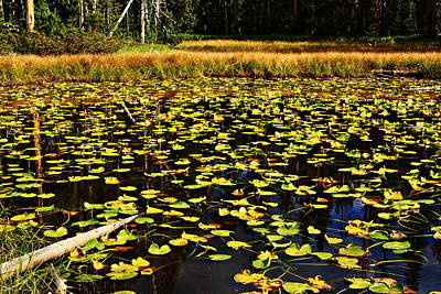 Lily Pond - Yellowstone National Park - Wyoming Poster