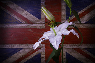 Lily With British Flag Poster