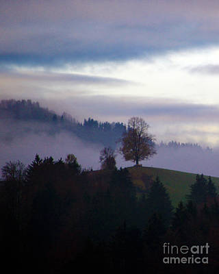 Linden Berry Tree And Fog 2 Poster by Susanne Van Hulst