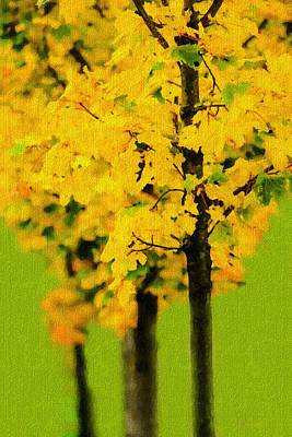Line Of Maple Trees In Autumn Poster by Tommytechno Sweden