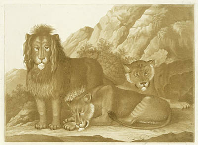 Lion And Two Lionesses, Isaac Van Haastert Poster by Isaac Van Haastert