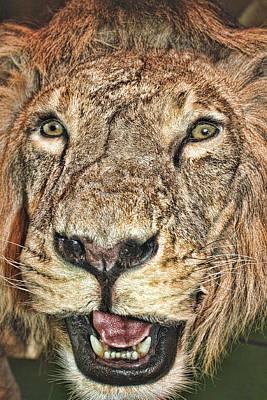 Poster featuring the photograph Lion by Angel Jesus De la Fuente