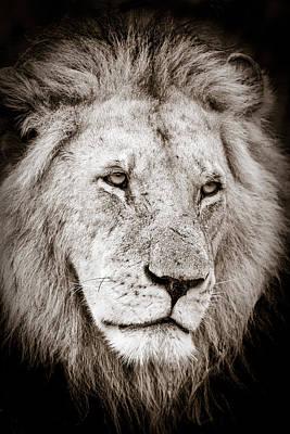 Lion Cameo Poster