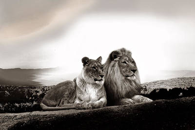 Lion Couple In Sunset Poster