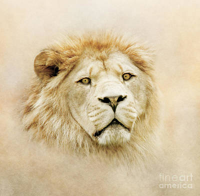 Poster featuring the photograph Lion Portrait by Roy  McPeak