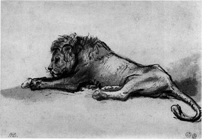 Lion Sketch Poster by Rembrandt