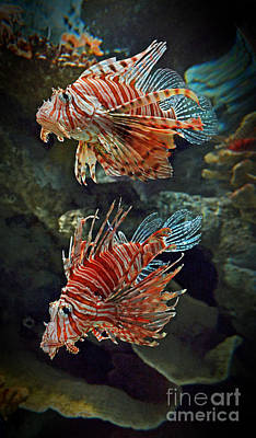 Lionfish II  Poster by Jim Fitzpatrick