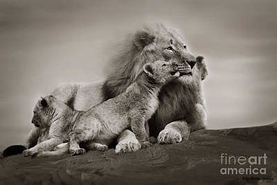 Poster featuring the photograph Lions In Freedom by Christine Sponchia