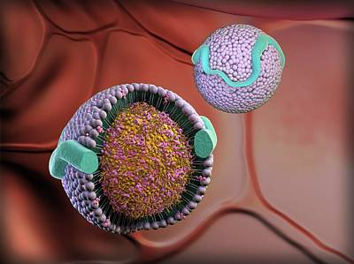 Lipoproteins In Bloodstream Poster by Gunilla Elam