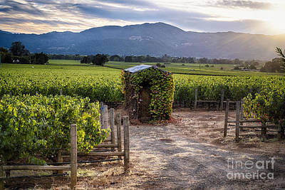 Little Shed In The Vineyard Poster by George Oze