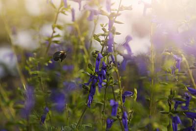 Little Bee In Flight Poster by Toni Hopper