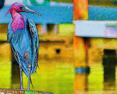 Poster featuring the photograph Little Blue Heron Posing by Pamela Blizzard
