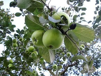 Little Green Apples Poster by Patricia E Sundik