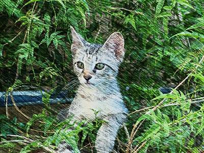 Poster featuring the photograph Little Kitten by Kathy Churchman