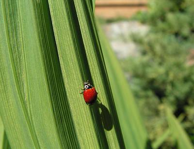 Ladybird Poster by Cheryl Hoyle