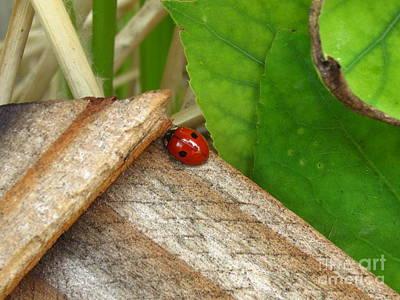 Little Lazy Ladybug Poster
