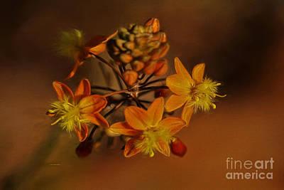 Little Orange Flowers Poster by Deborah Benoit
