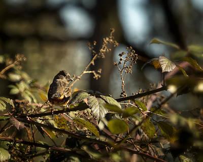 Little Sharp Eyed Bird Poster