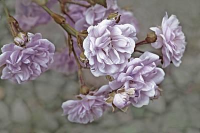 Little Tea Roses Purple Poster