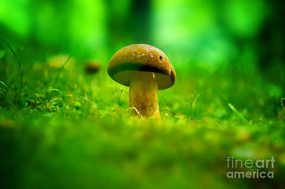 Little Wild Mushroom On A Green Forest Patch Poster