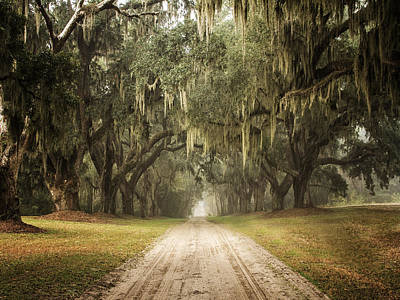 Live Oak Allee' On A Foggy Morn Poster by Sandra Anderson