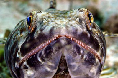 Lizard Fish Poster