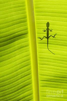 Lizard Leaf Poster by Tim Gainey