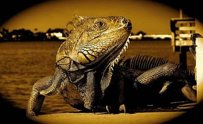Lizard Sunbathing In Miami II Poster