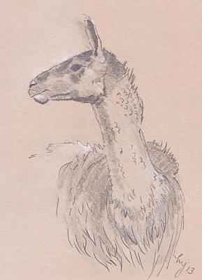 Llama Drawing Poster by Mike Jory