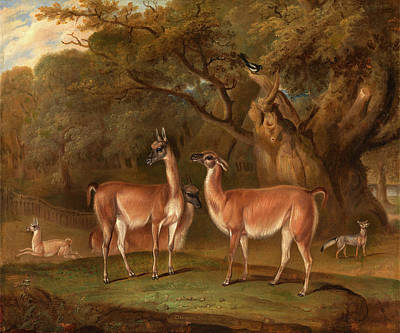 Llamas And A Fox In A Wooded Landscape Llamas In A Park Poster by Litz Collection