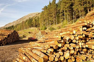 Logging On The Slopes Above Thirlmere Poster by Ashley Cooper
