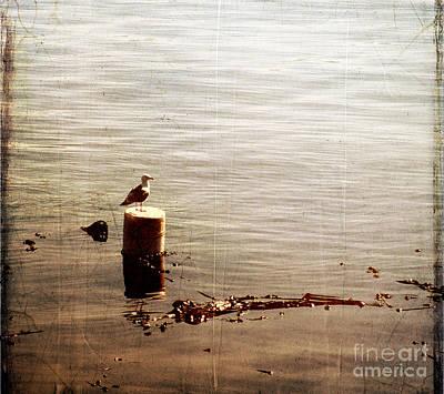 Lone Gull I I Poster by Sharon Elliott