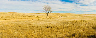 Lone Hackberry Tree In Autumn Plains Poster by Panoramic Images