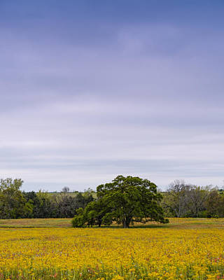 Lone Oak In A Field Of Phlox - Industry Texas Poster by Silvio Ligutti
