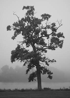 Poster featuring the photograph Lone Oak by Viviana  Nadowski