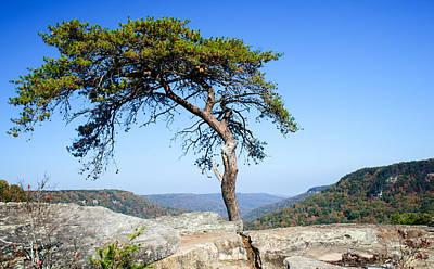 Lone Pine Tree Scrub  Poster