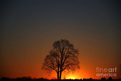 Lone Tree At Sunrise Poster