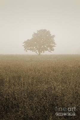 Lone Tree In Meadow Poster by David Gordon