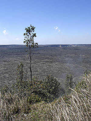 Lone Tree Kilauea Crater Poster