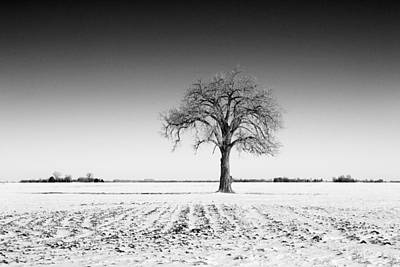 Lone Tree On Snowy Field Poster by Donald  Erickson
