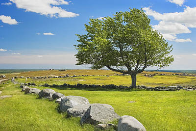 Lone Tree With Blue Sky In Blueberry Field Maine Poster by Keith Webber Jr