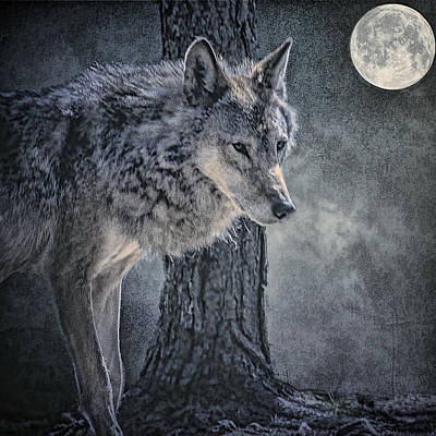 Poster featuring the photograph Lone Wolf by Brian Tarr
