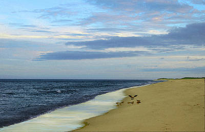 Lonely Cape Cod Beach Poster