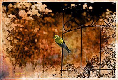 Lonely Goldfinch - Featured In Wildlife - Harmony And Happiness - Eye On Fine Art Groups Poster by EricaMaxine  Price