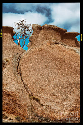 Lonely Tree And Pink Granite Rock - Enchanted Rock State Natural Area - Texas Hill Country Poster by Silvio Ligutti