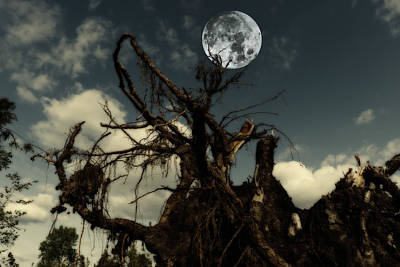 Lonely Tree Roots Reaching For A Full Moon Poster