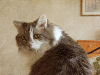 Long-haired Cat Portrait Poster